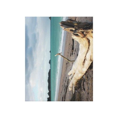 beach driftwood photo art canvas print