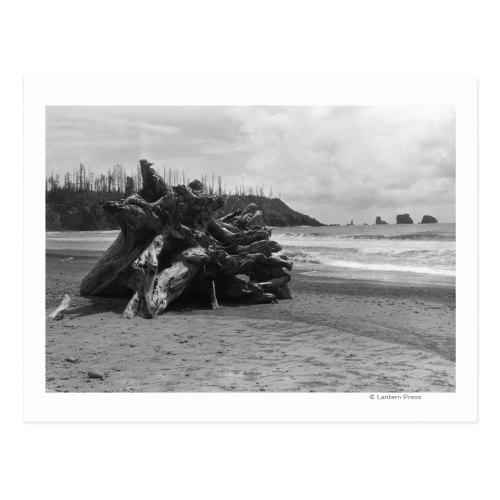 La Push, WA Ocean Beach Scene of Driftwood Postcard